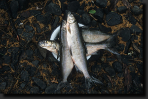 Z lovu ryb