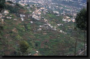 Madeirské vinice se nacházejí na tisících maličkých terasovitých polích na úbočí kopců