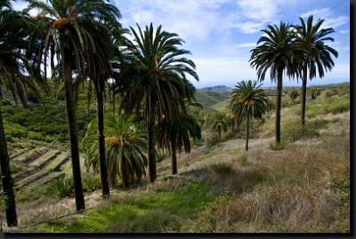 Jedna z mnoha palmových oáz na ostrově