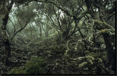 V nitru vřesovcového pralesa