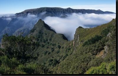 Pralesem zarostlé hory na Madeiře