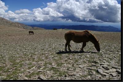 Polodivocí koně na horských planinách