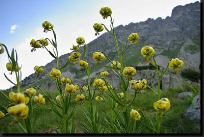 Pyrenejská horská květena