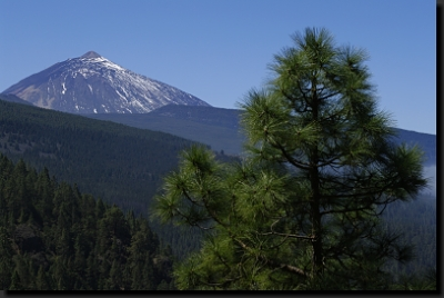 Borovicové lesy a nejvyšší hora Kanárů - Pico del Teide (3.718 m)
