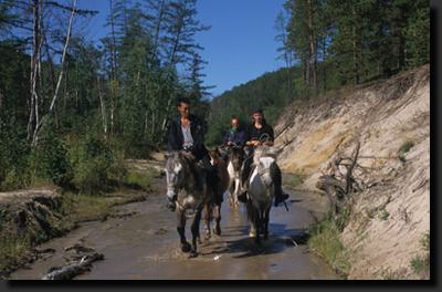 Na koních v nížinné tajze