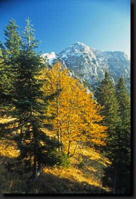 Kamnické Alpy