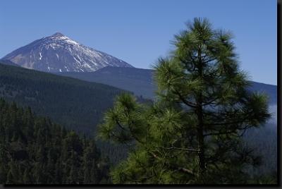 Borovicové lesy a nejvyšší hora Pico del Teide na ostrově Tenerife